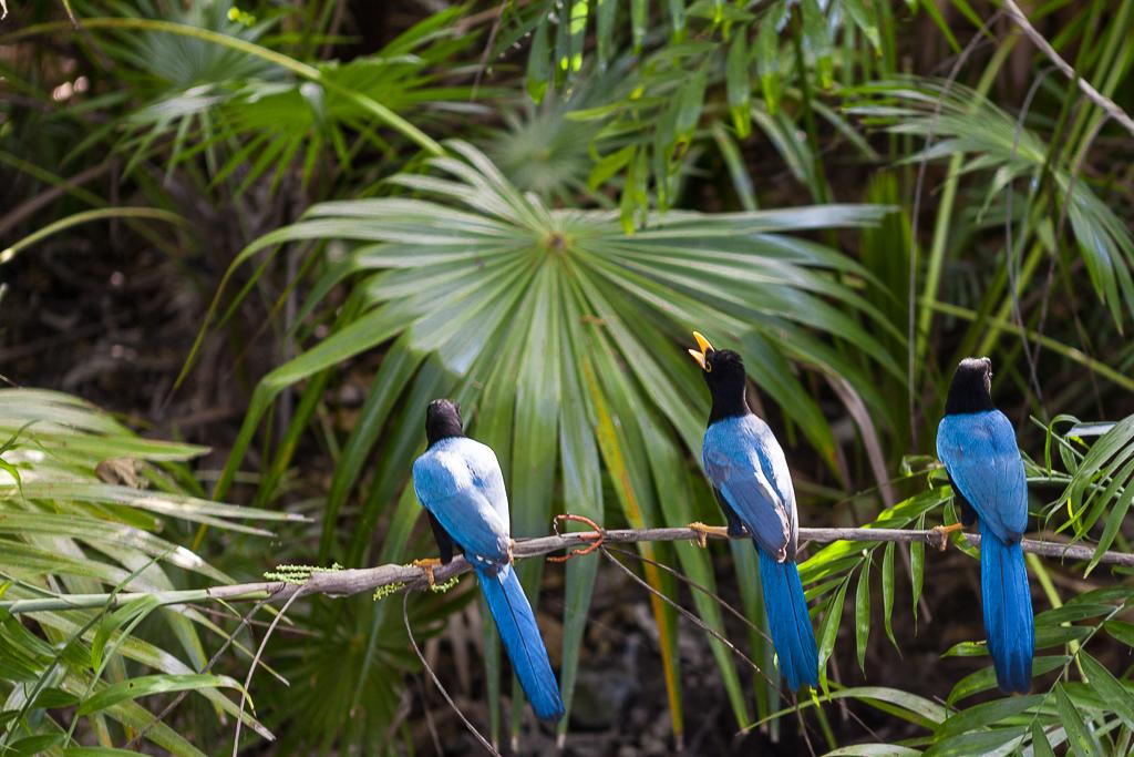 Karibik_2674-2_birds_01